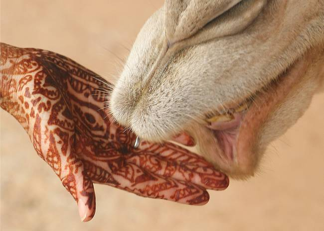 Henna-Hand-with-Camel-in-Morocco_art