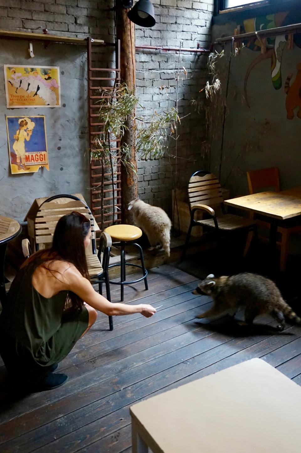 Raccoon Cafe seoul korea blind alley