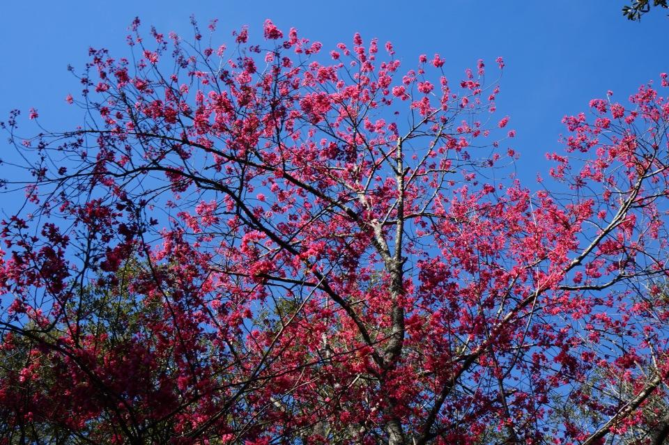 forsyth-park-flowers